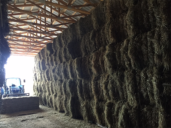 Image of Stacked Hay Bales